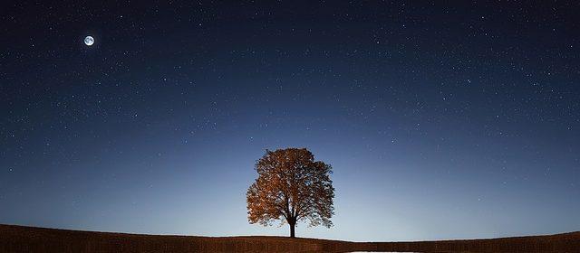 la pleine lune face a un lac et un arbre